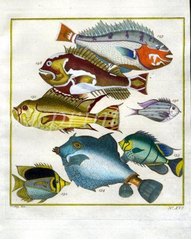 PLATE SIXTEEN: EXTRAORDINARY FISHES OF AMBON - SNAPPER, BUTTERFLYFISH, THORNBACK BOXFISH print
