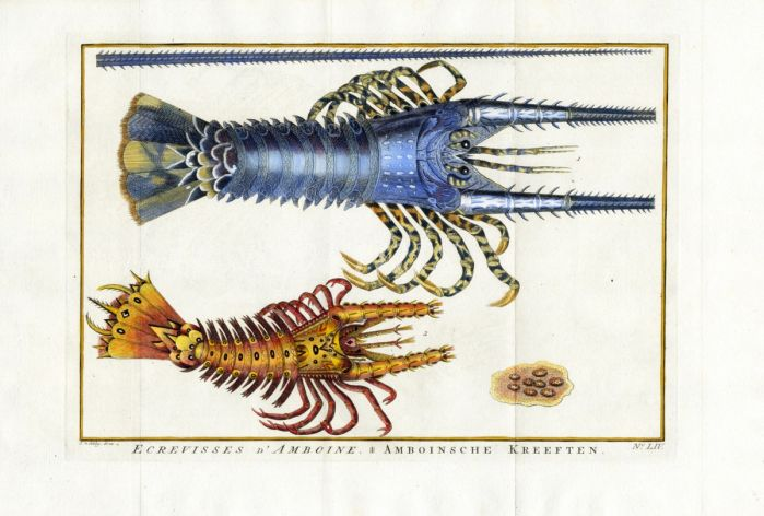 SCHLEY/PREVOST - ECREVISSES D' AMBOINE  crayfish print